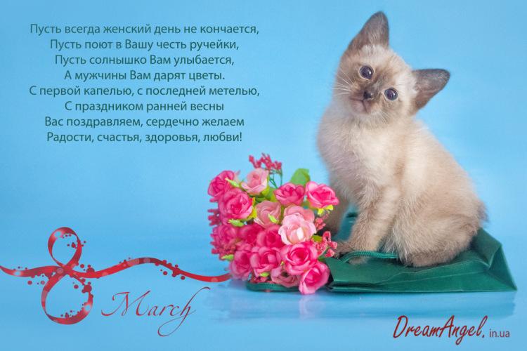 Поздравления котиком 919